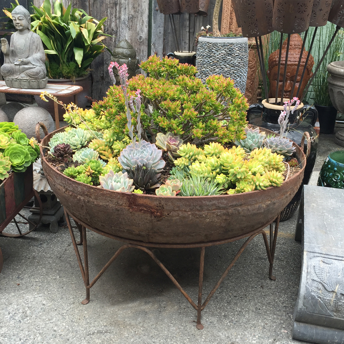 Iron Kadai Bowl With Succulents Furniture Mix Furniture